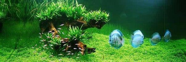 аквариумистика