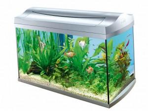 Как выбрать и купить аквариум для рыбок?