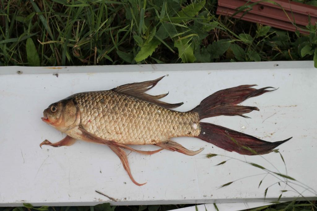 Дима из «кубань» просит распознать рыбу по фото