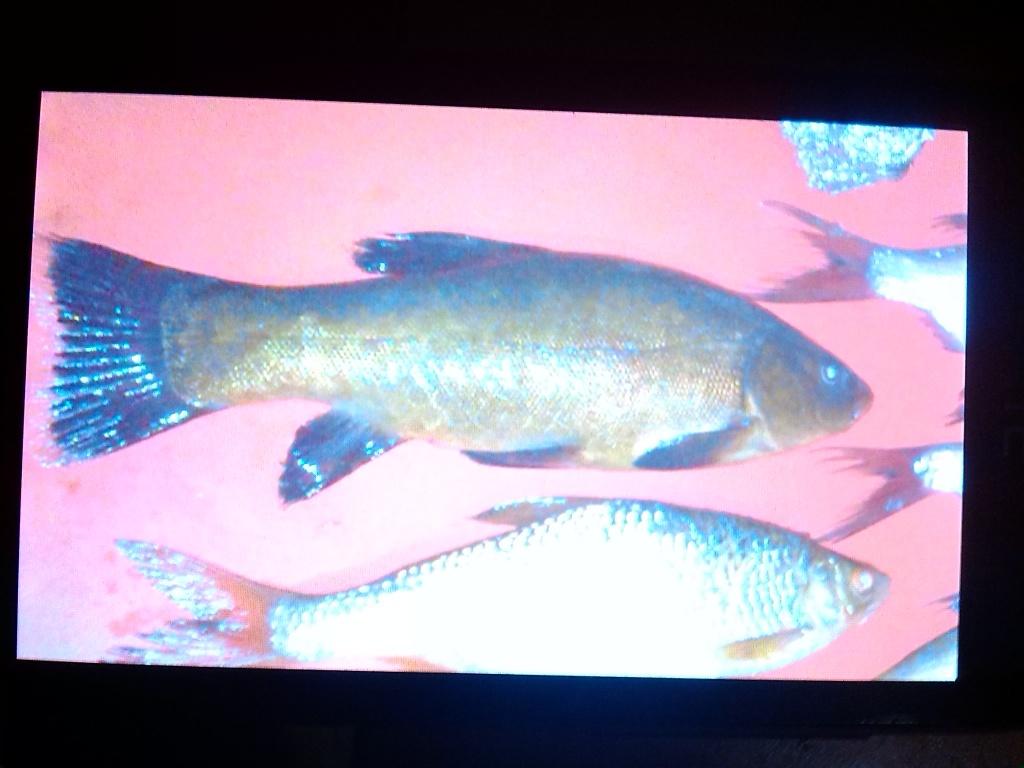 сергей из «белгород» просит распознать рыбу по фото