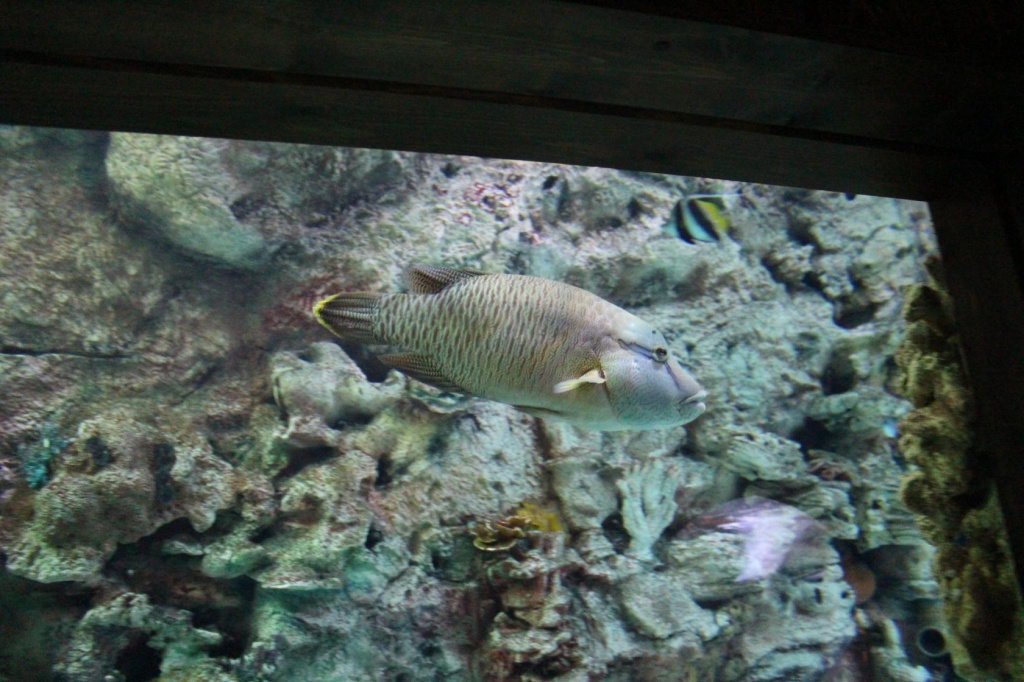 Ирина из «Курск» просит распознать рыбу по фото