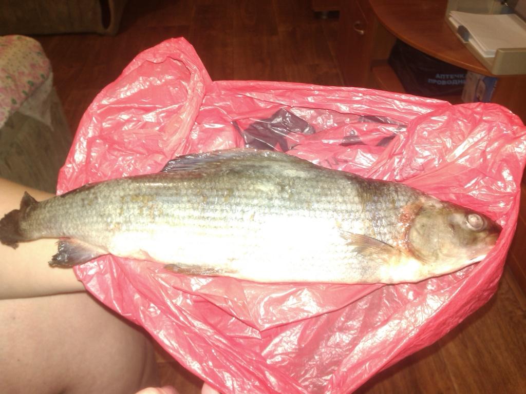 елена из «дзержинск» просит распознать рыбу по фото