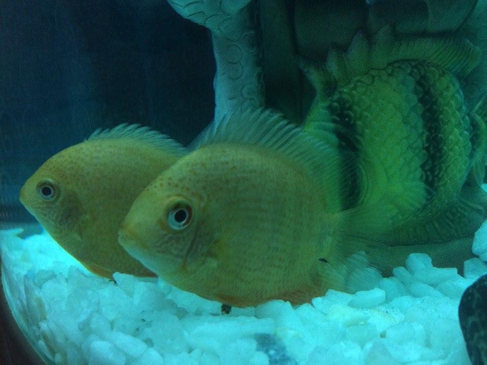 Танзиля из «Казань» просит распознать рыбу по фото