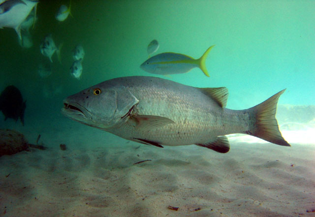 Дмитрий Пашков из «Макеевка» просит распознать рыбу по фото
