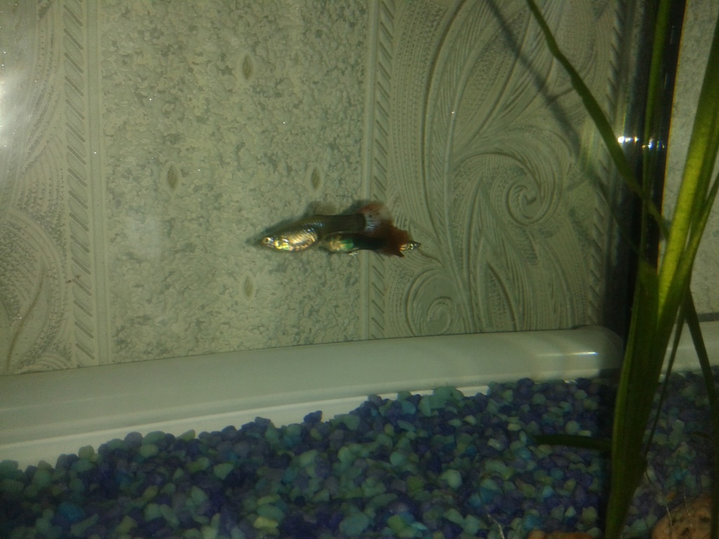 Дмитрий из «Ангарск» просит распознать рыбу по фото