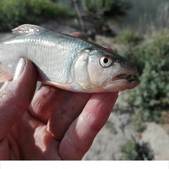 Нурбек из «Кызылорда» просит распознать рыбу по фото