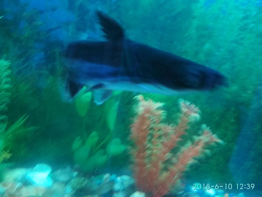 Елена из «Волжский» просит распознать рыбу по фото