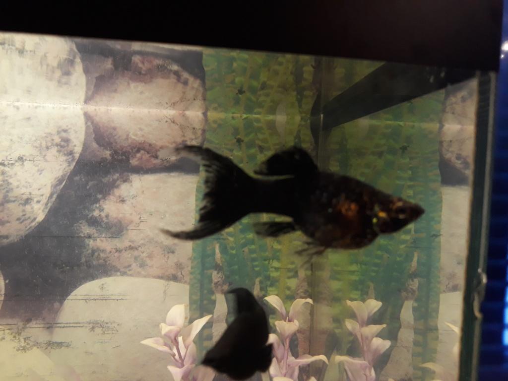 Руслан из «Городок» просит распознать рыбу по фото