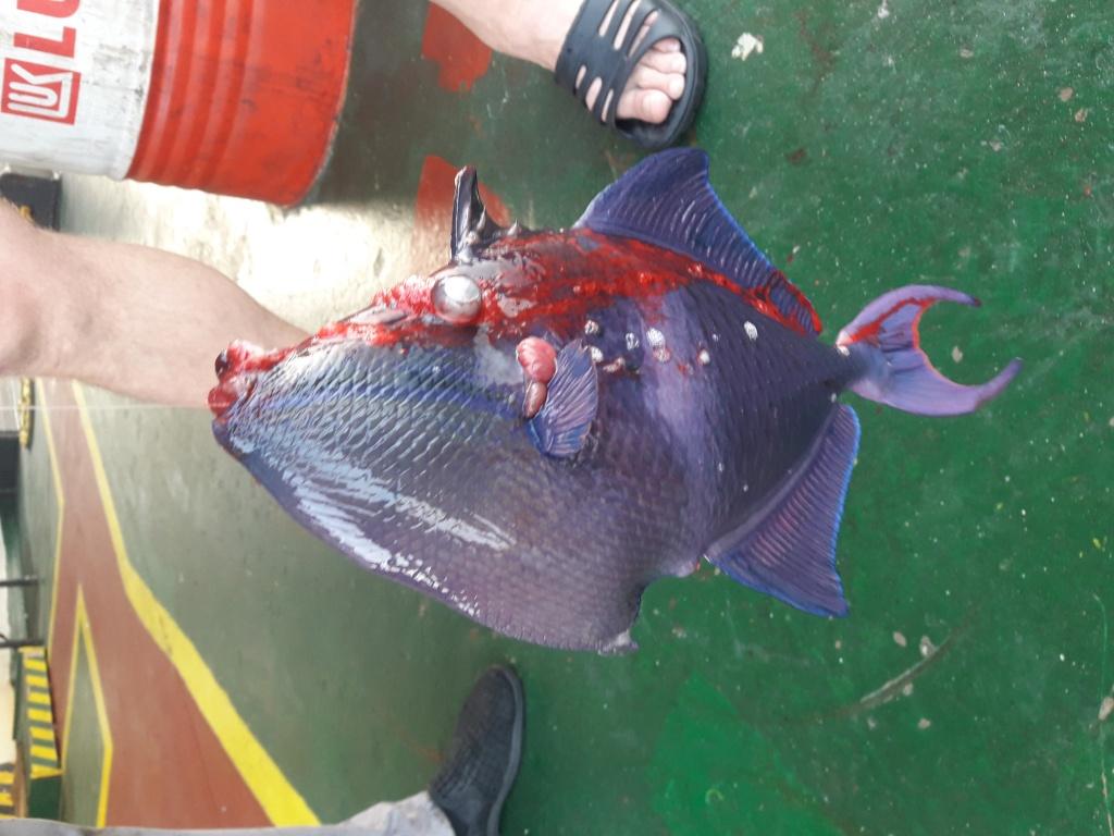 Алексей из «Одесса» просит распознать рыбу по фото