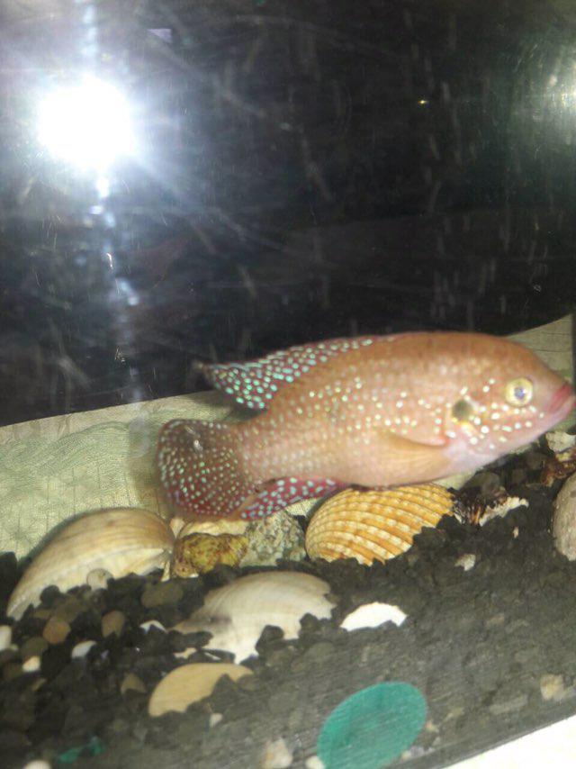 Макс из «Донецк» просит распознать рыбу по фото