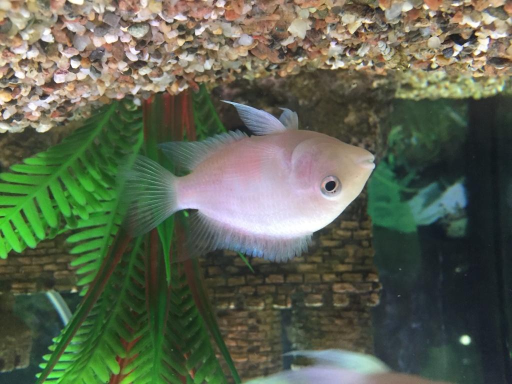 Евгений из «Спб» просит распознать рыбу по фото