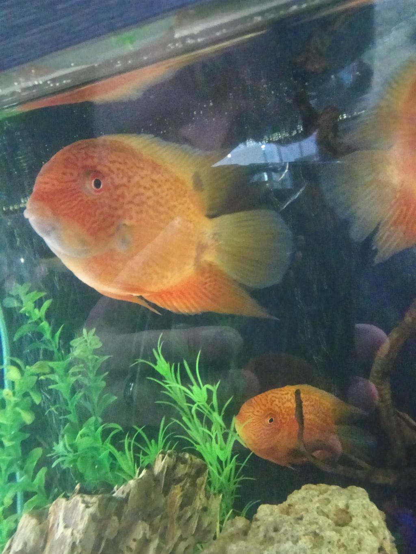 Николай из «Мытищи» просит распознать рыбу по фото