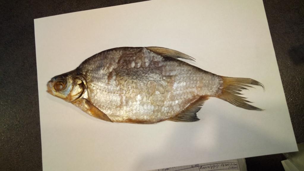 Руслан из «Москва» просит распознать рыбу по фото