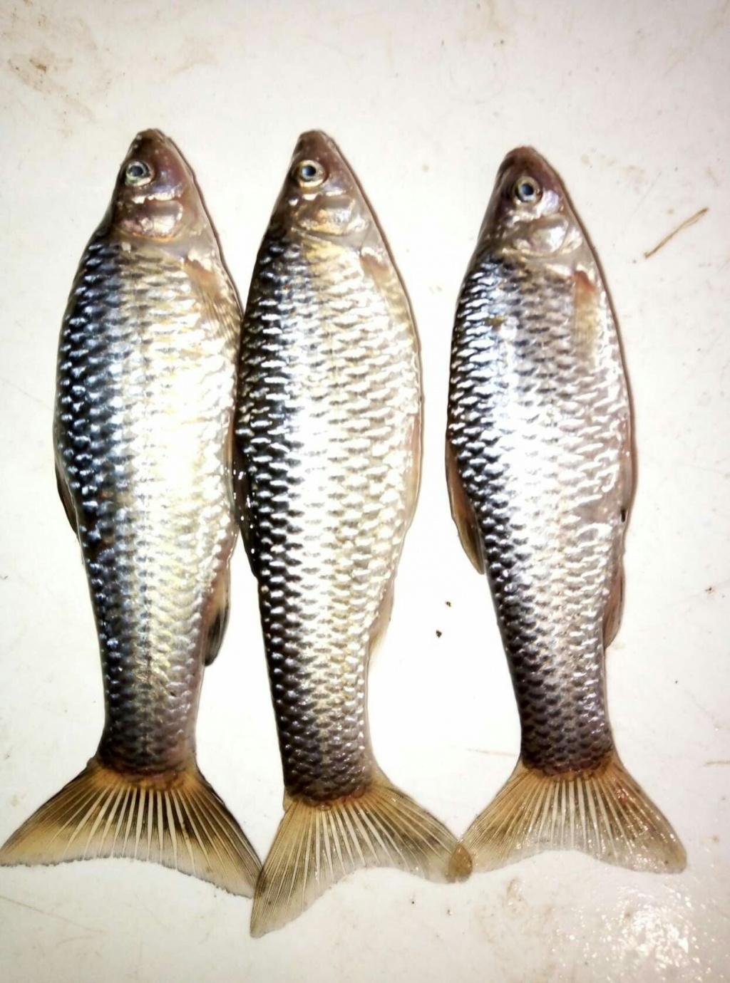 Алексей из «Йошкар-ола» просит распознать рыбу по фото