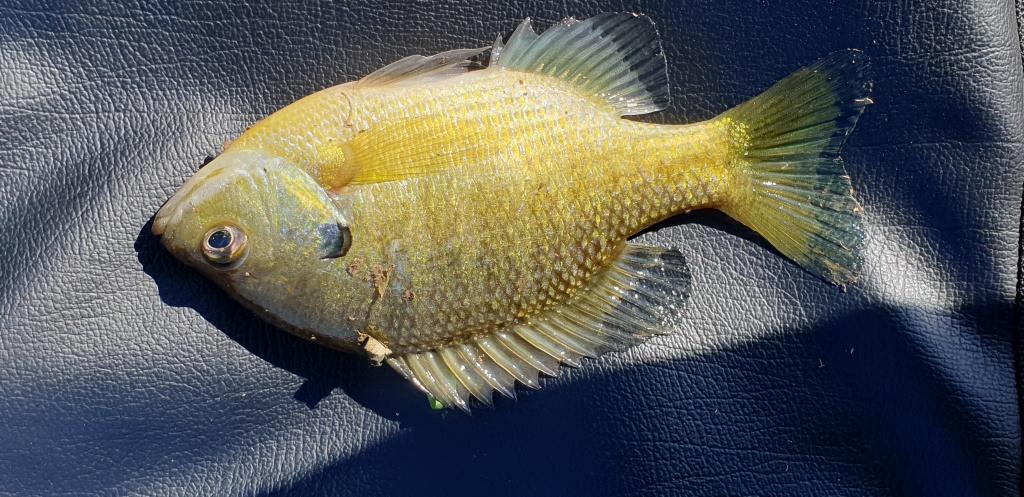Андрей из «Кванджу корея» просит распознать рыбу по фото