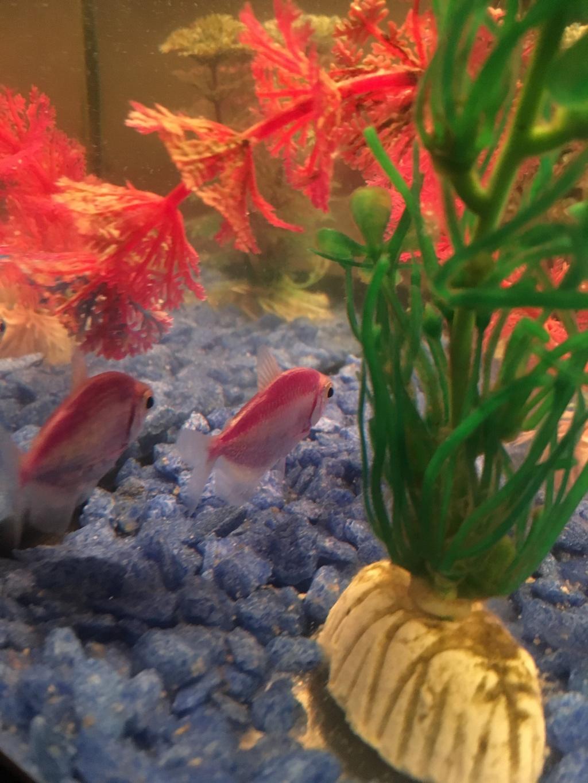 Елена из «Архангельск» просит распознать рыбу по фото