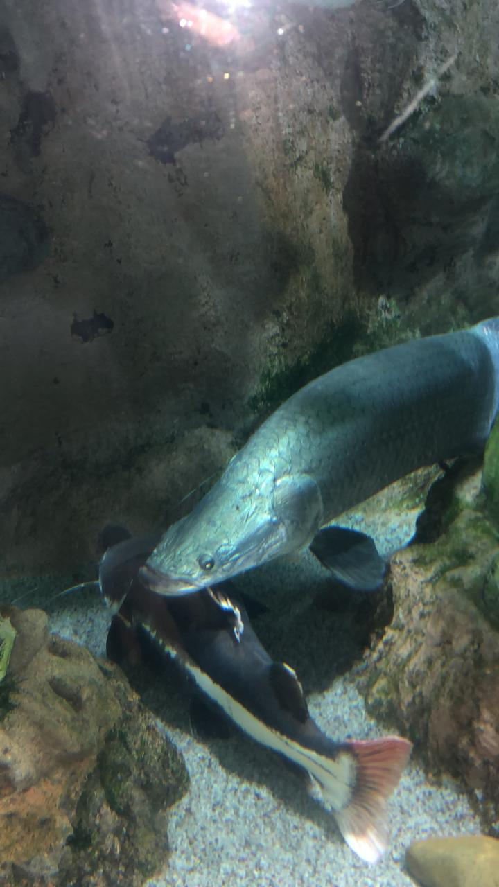 Ольга из «Санкт-Петербург» просит распознать рыбу по фото