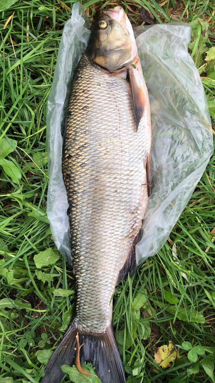 SERGEY из «Moscva» просит распознать рыбу по фото