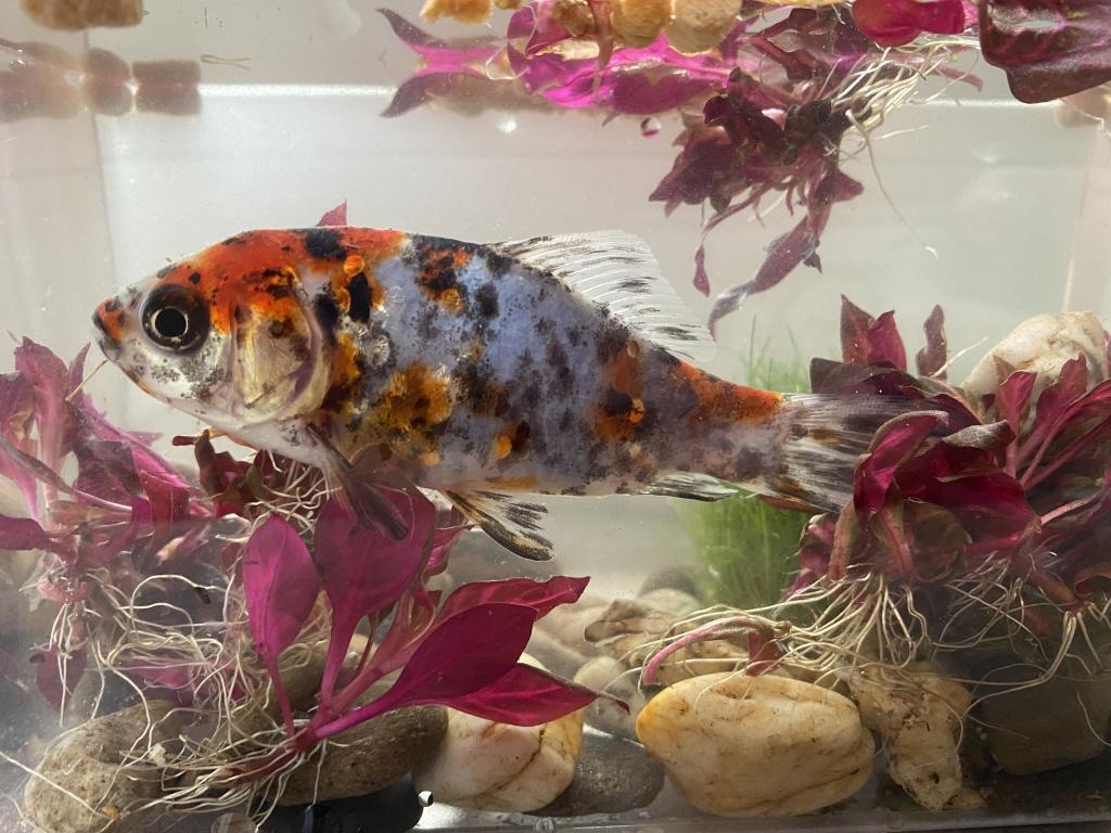 Паята из «Дуйсбург» просит распознать рыбу по фото