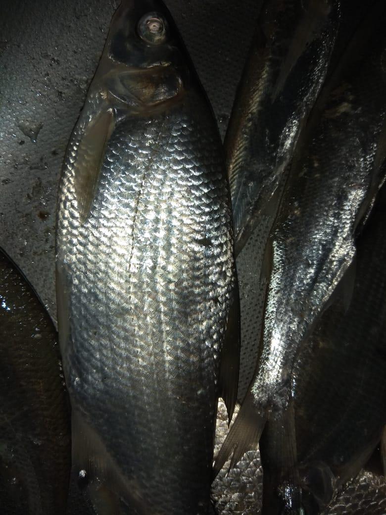 дядя из «крымск» просит распознать рыбу по фото