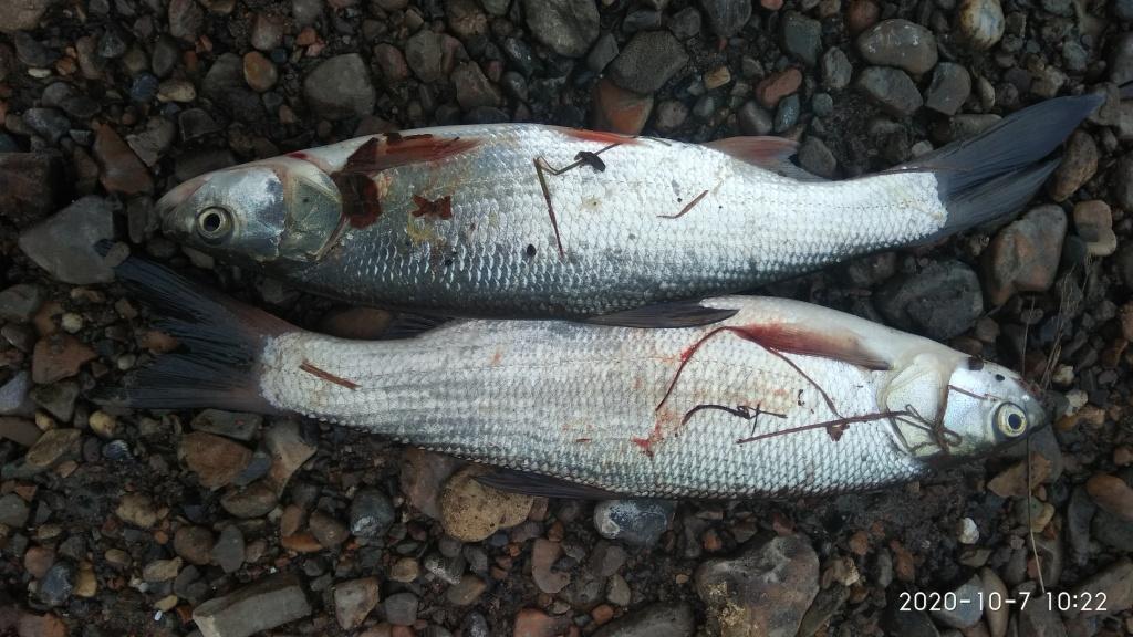 Евгений из «Екатеринбург» просит распознать рыбу по фото
