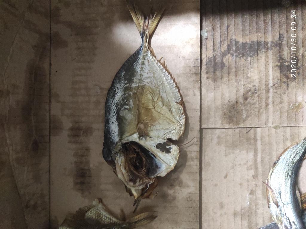 Чуча из «Чучаград» просит распознать рыбу по фото