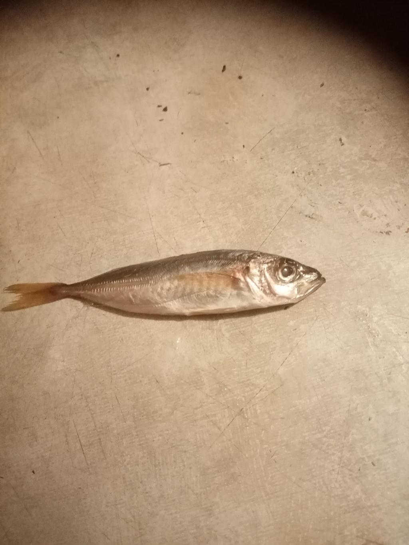 Вася из «Тверь» просит распознать рыбу по фото