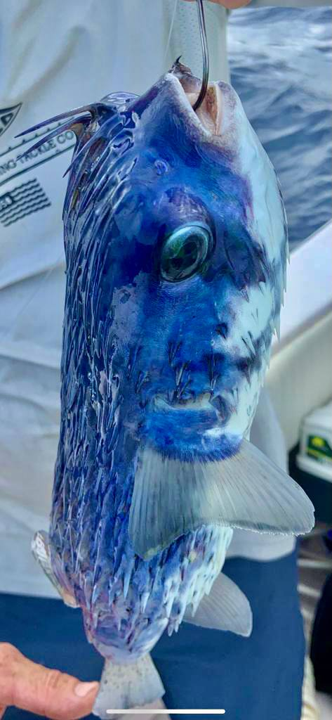 Андрей из «Маями» просит распознать рыбу по фото