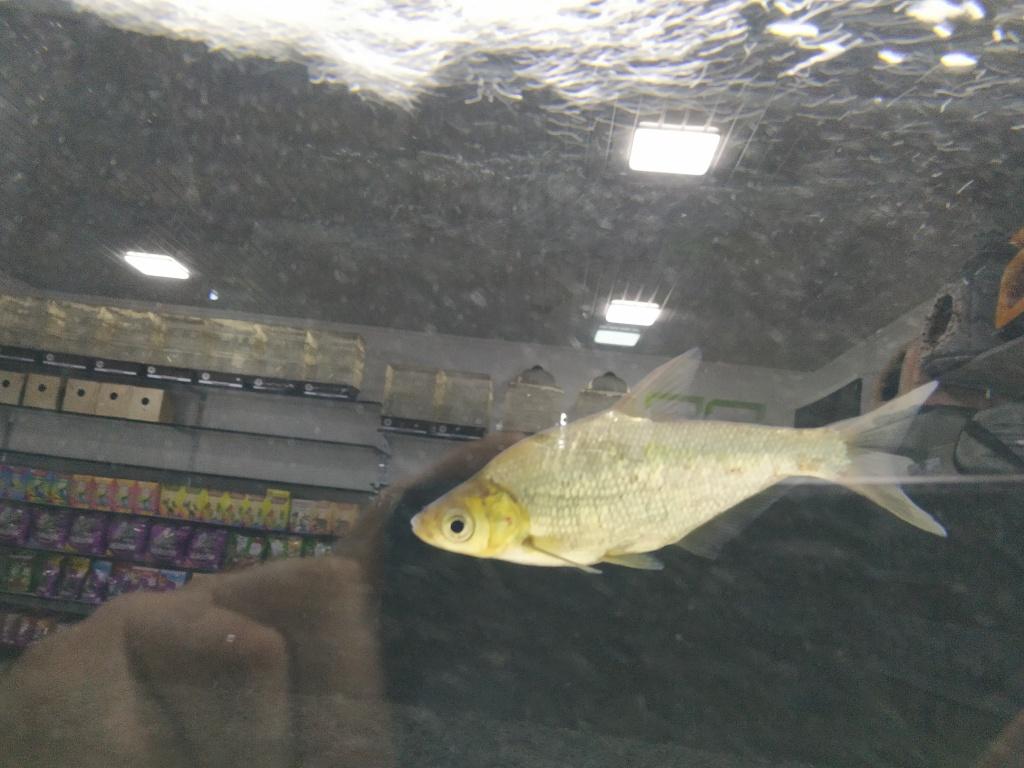 Алексей из «Варкута» просит распознать рыбу по фото