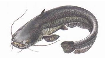 Щука  хищная рыба  YouTube