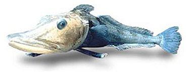 Ледяная рыба (Ледянка)