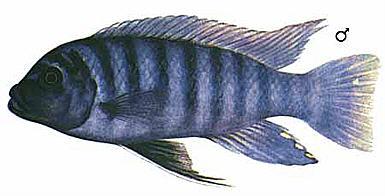 "Конкурс "" Рыба "" - Страница 2 483"