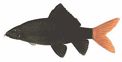 "Конкурс "" Рыба "" - Страница 2 490"