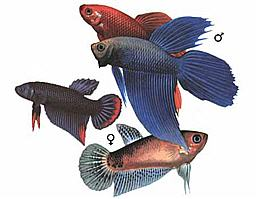 "Конкурс "" Рыба "" - Страница 2 509"