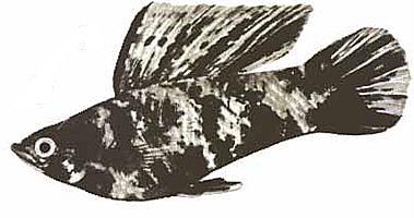 "Конкурс "" Рыба "" - Страница 2 510"