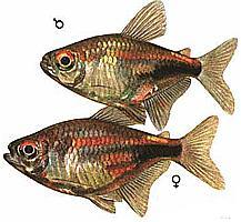 "Конкурс "" Рыба "" - Страница 2 515"