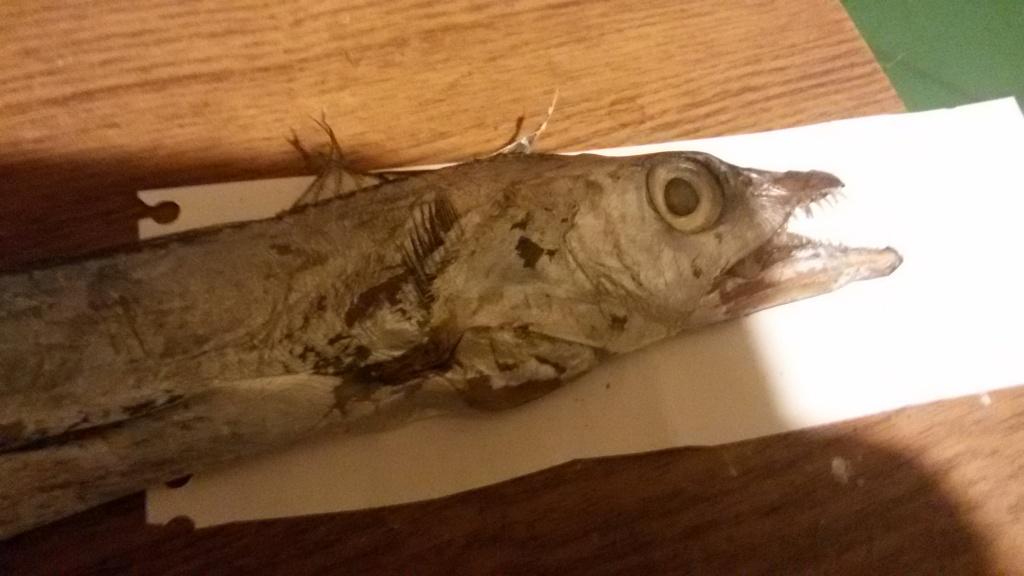 фото рыбы